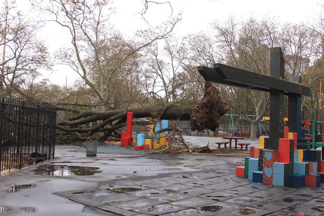 Fallen Trees all over Battery Park after Hurricane Sandy hit the coast