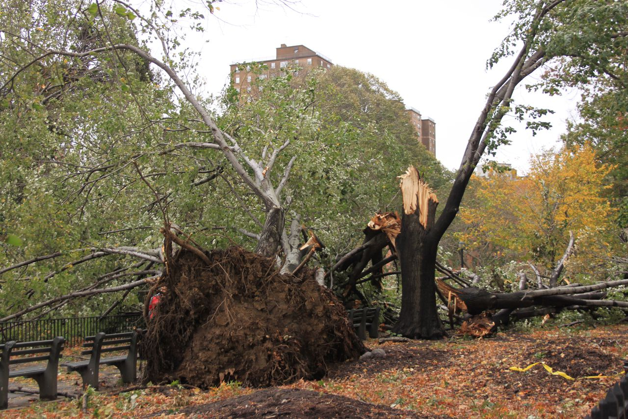fallen trees all over manhattan's east side 2