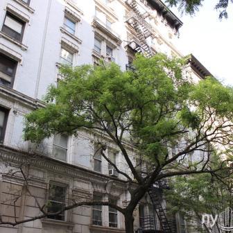 The Andrew Condominium - 251 West 98th Street - Condominium