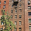 29 Fifth Avenue Building