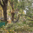 fallen trees all over manhattan's east side